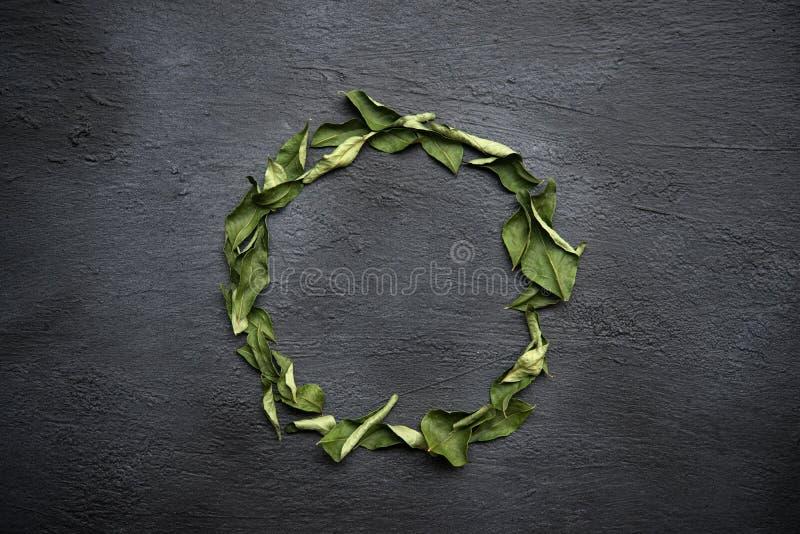 Ξηρά φύλλα κάρρυ στοκ εικόνες με δικαίωμα ελεύθερης χρήσης