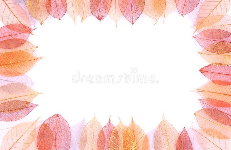 ξηρά φύλλα πλαισίων στοκ φωτογραφίες