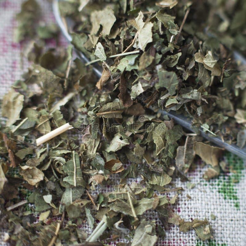 Ξηρά φύλλα βατόμουρων στοκ εικόνα
