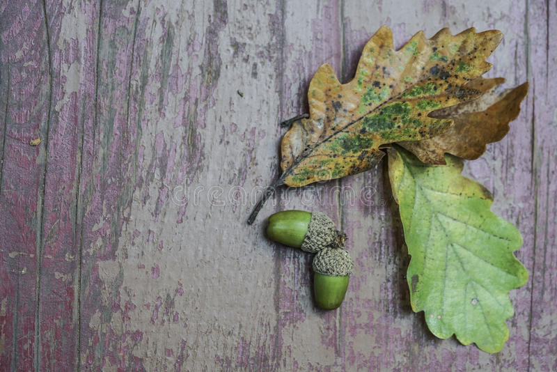 Ξηρά φύλλα και βελανίδι φθινοπώρου στο ξύλινο υπόβαθρο στοκ φωτογραφία με δικαίωμα ελεύθερης χρήσης
