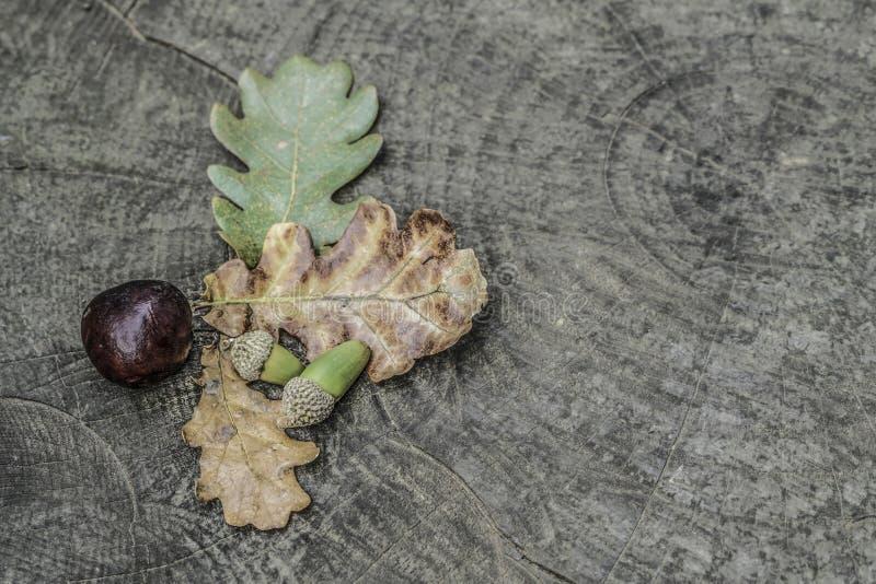 Ξηρά φύλλα και βελανίδι φθινοπώρου στο ξύλινο υπόβαθρο στοκ εικόνες