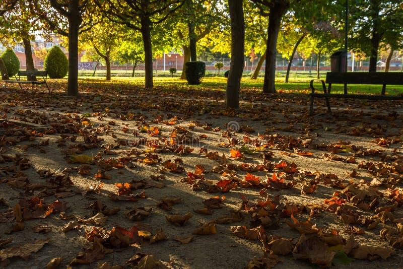 Ξηρά φύλλα πτώσεων σε ένα πάρκο στο ηλιοβασίλεμα στοκ εικόνες με δικαίωμα ελεύθερης χρήσης