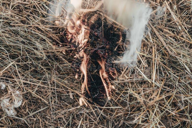 ξηρά χλόη κοντά στο δάσος που τα δάση καίνε κίνδυνος πυρκαγιάς r στοκ εικόνα με δικαίωμα ελεύθερης χρήσης