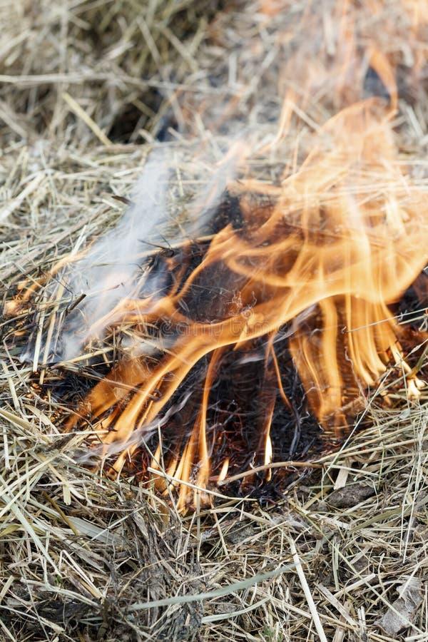 ξηρά χλόη κοντά στο δάσος που τα δάση καίνε κίνδυνος πυρκαγιάς r στοκ εικόνα