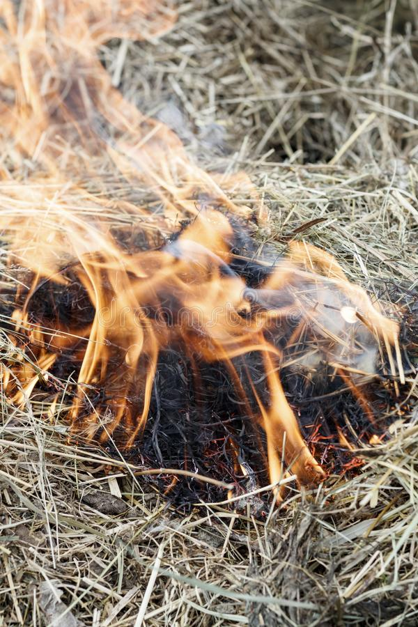 ξηρά χλόη κοντά στο δάσος που τα δάση καίνε κίνδυνος πυρκαγιάς r στοκ εικόνες