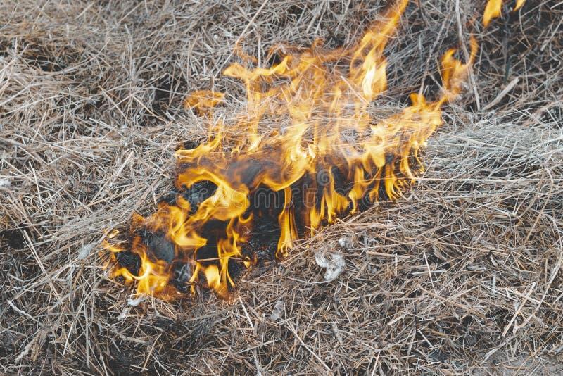 ξηρά χλόη κοντά στο δάσος που τα δάση καίνε κίνδυνος πυρκαγιάς r στοκ φωτογραφία με δικαίωμα ελεύθερης χρήσης