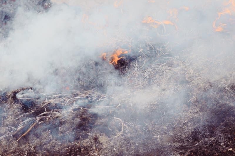 ξηρά χλόη κοντά στο δάσος που τα δάση καίνε κίνδυνος πυρκαγιάς r στοκ φωτογραφία