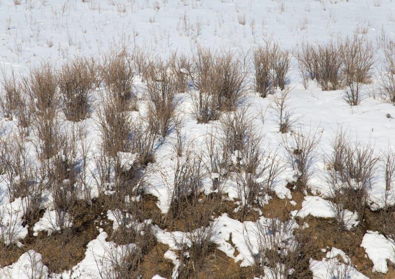 Ξηρά χλόη στο χιόνι το χειμώνα στοκ εικόνα
