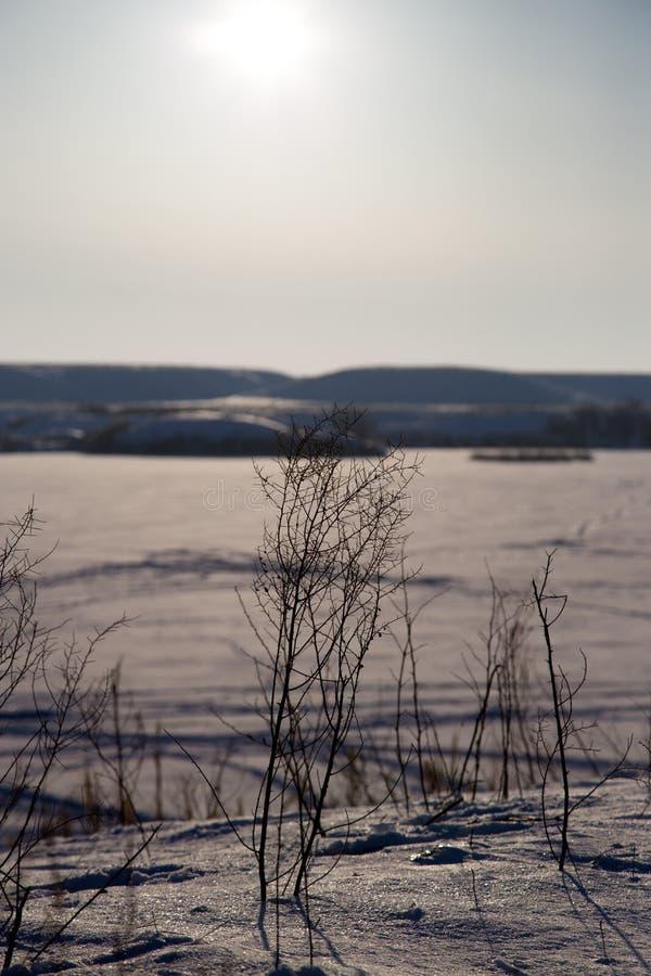 Ξηρά χλόη στο χιόνι το χειμώνα στοκ φωτογραφία με δικαίωμα ελεύθερης χρήσης