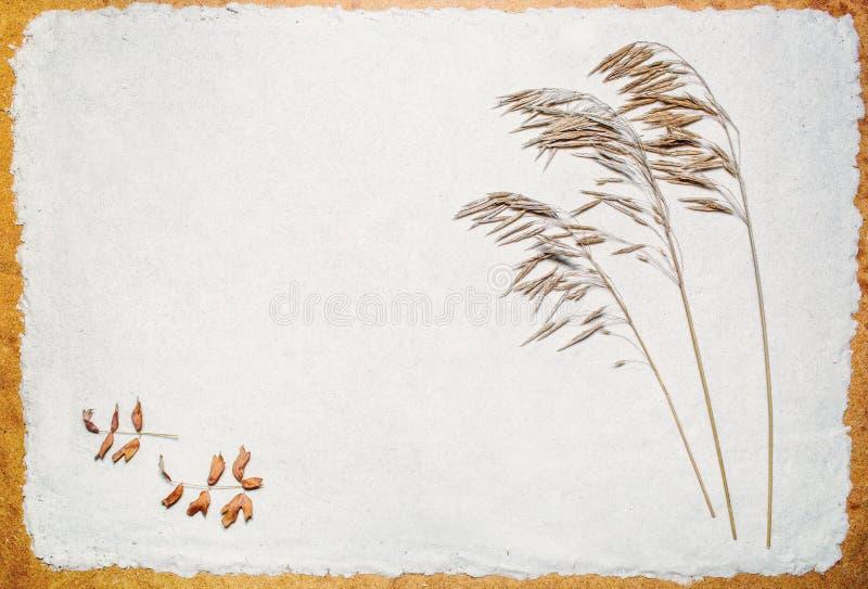 Ξηρά χλόη λιβαδιών στην άμμο στοκ φωτογραφία με δικαίωμα ελεύθερης χρήσης