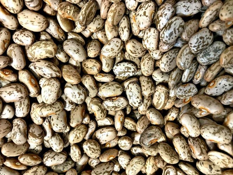 Ξηρά Pinto φασόλι, δημοφιλέστερο φασόλι στις Ηνωμένες Πολιτείες και το βορειοδυτικό Μεξικό, στοκ εικόνες