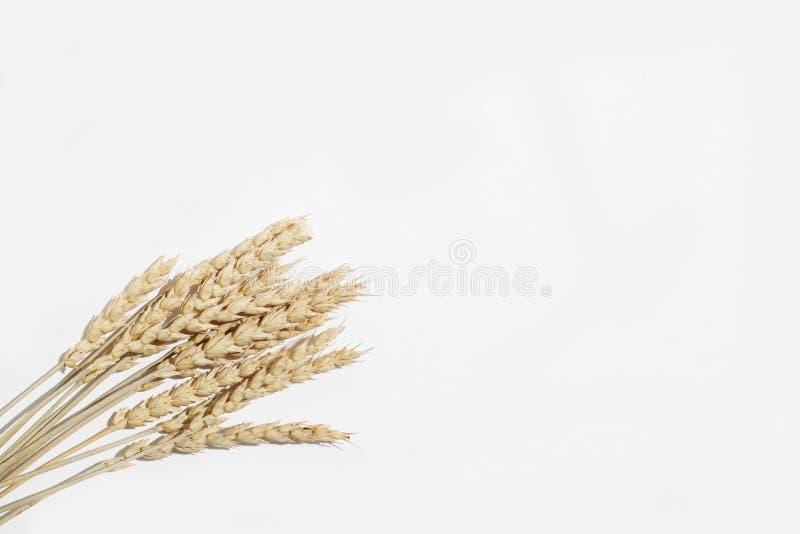 Ξηρά spikelets σίτου δέσμη σε ένα άσπρο υπόβαθρο στοκ φωτογραφία με δικαίωμα ελεύθερης χρήσης