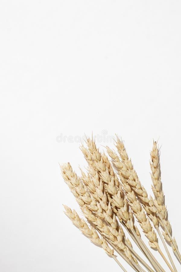Ξηρά spikelets σίτου δέσμη σε ένα άσπρο υπόβαθρο στοκ εικόνες