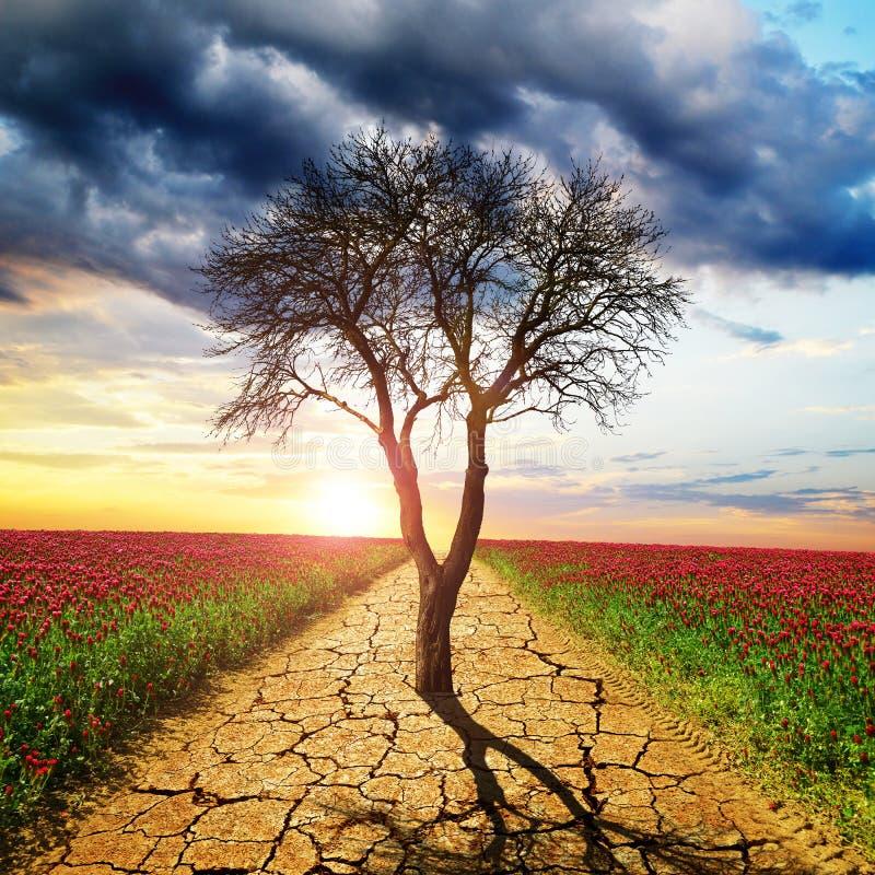 Ξηρή ραγισμένη γη και νεκρό δέντρο στη μέση του άνθιστου πεδίου στοκ εικόνα με δικαίωμα ελεύθερης χρήσης