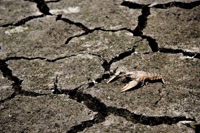 Ξηρασία - ποταμός που στεγνώνουν με την πεθαμένη παγκόσμια αύξηση της θερμοκρασίας λόγω του φαινομένου του θερμοκηπίου καβουριών στοκ εικόνα με δικαίωμα ελεύθερης χρήσης