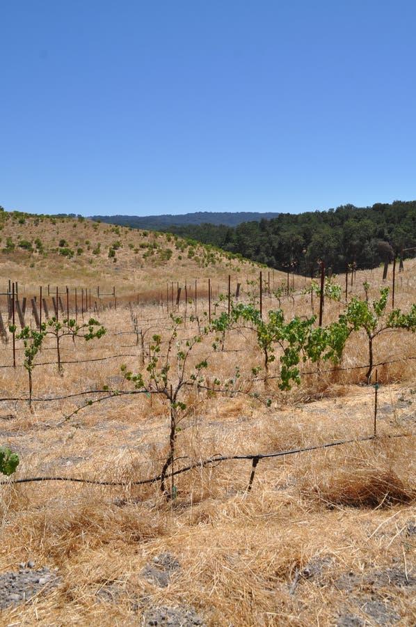 Ξηρασία χώρας κρασιού στοκ εικόνες