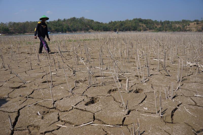 ξηρασία στοκ εικόνες