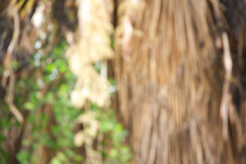 Ξηροί κρεμώντας κλάδοι φοινίκων και πράσινα φύλλα του φυτού ορειβατών Από την εστίαση στοκ εικόνες