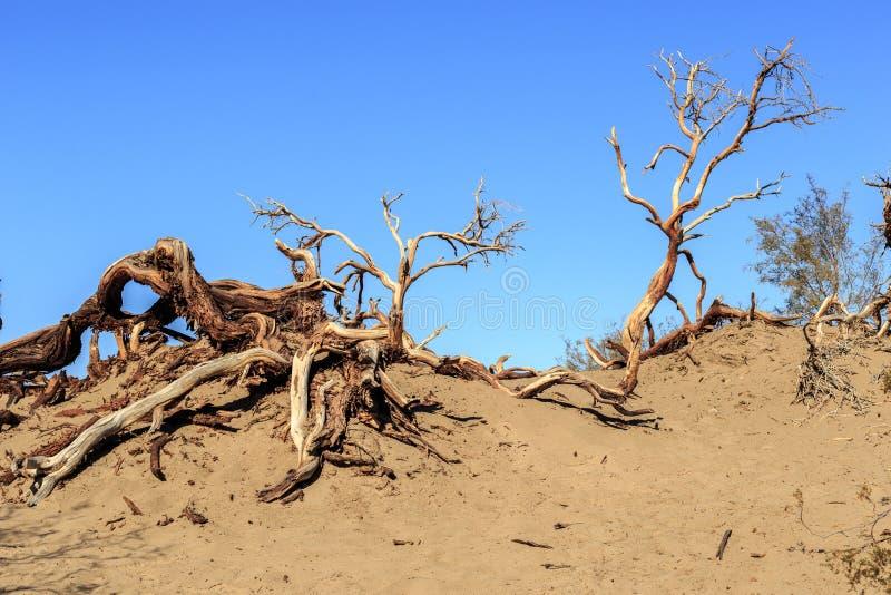 Ξηροί κλάδοι στην άμμο στοκ εικόνες