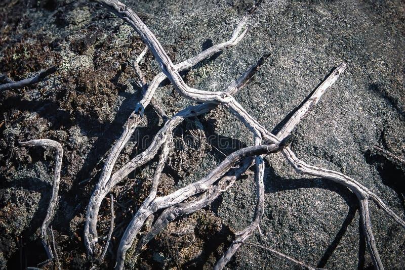 Ξηροί κλάδοι στο έδαφος στοκ φωτογραφίες με δικαίωμα ελεύθερης χρήσης