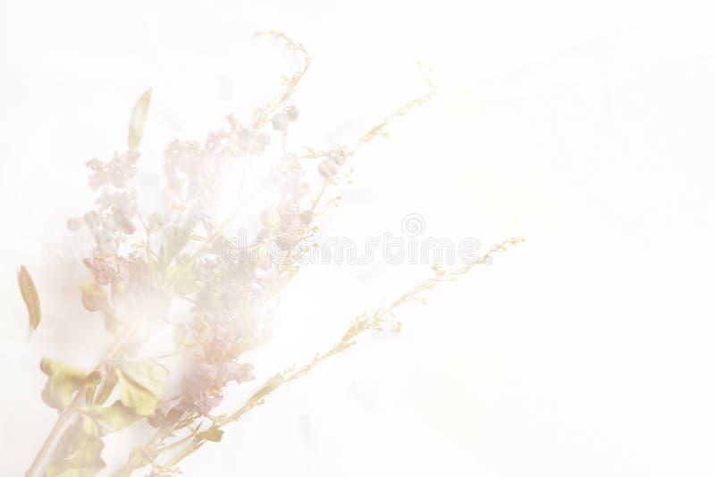 Ξηροί παλαιός εκλεκτής ποιότητας πορφυρός λουλουδιών και πράσινος στο άσπρο υπόβαθρο διανυσματική απεικόνιση
