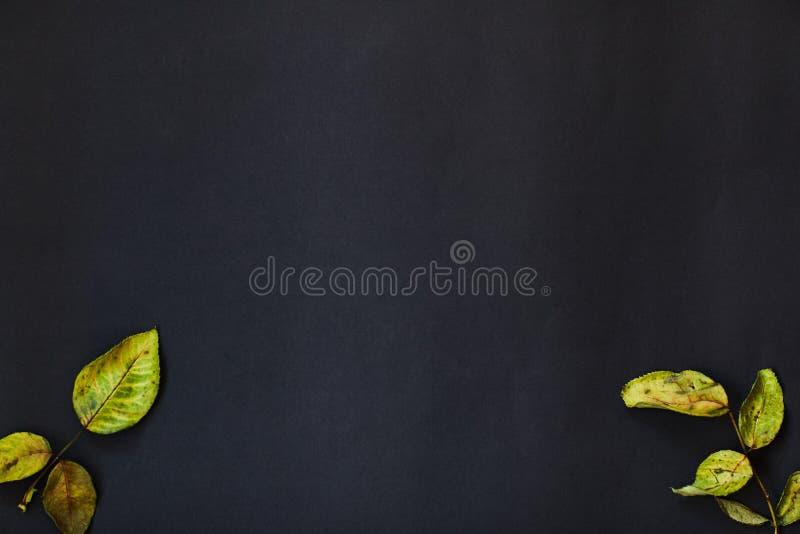 Ξηρός αυξήθηκε φύλλα σε ένα μαύρο υπόβαθρο ενεργειακή εικόνα έννοιας ανασκόπησης ελεύθερη απεικόνιση δικαιώματος