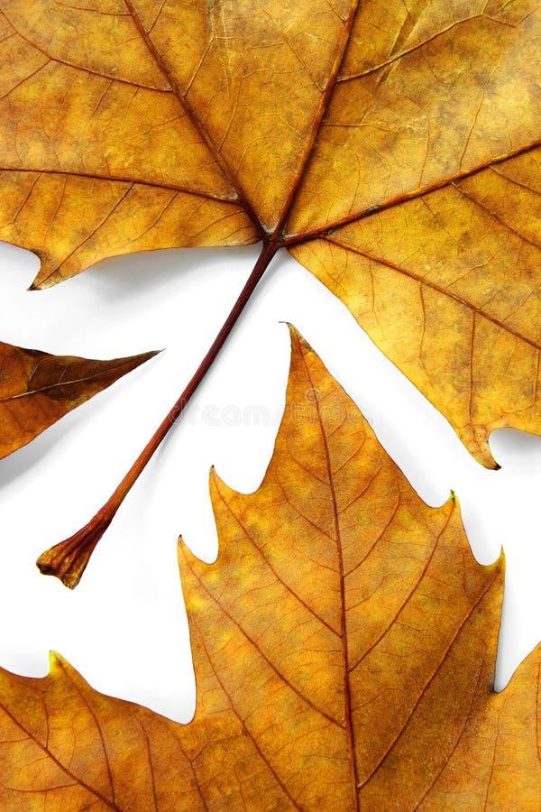 ξηρός βγάζει φύλλα στοκ φωτογραφία με δικαίωμα ελεύθερης χρήσης