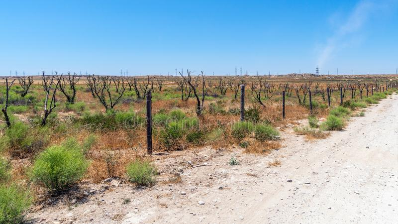 Ξηρός κήπος στα καυτά ξηρά κλίματα στοκ φωτογραφίες