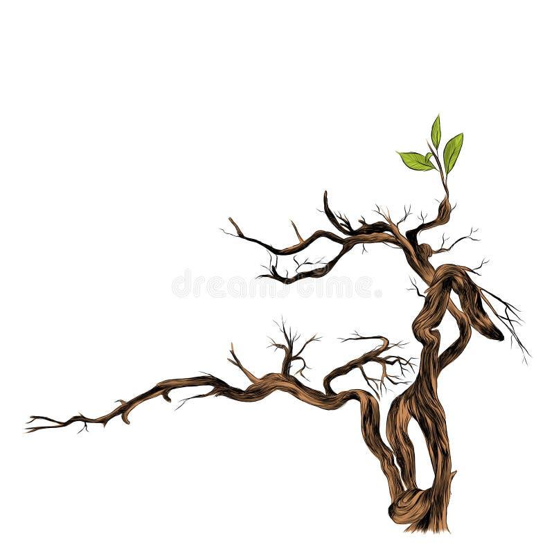 Ξηρός, το διάνυσμα σκίτσων δέντρων ελεύθερη απεικόνιση δικαιώματος