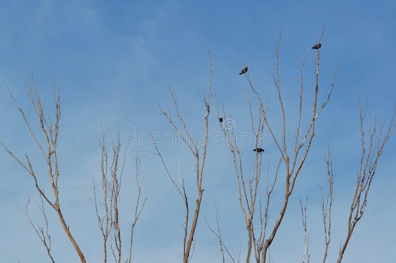 ξηρό δέντρο πουλιών στοκ φωτογραφία με δικαίωμα ελεύθερης χρήσης
