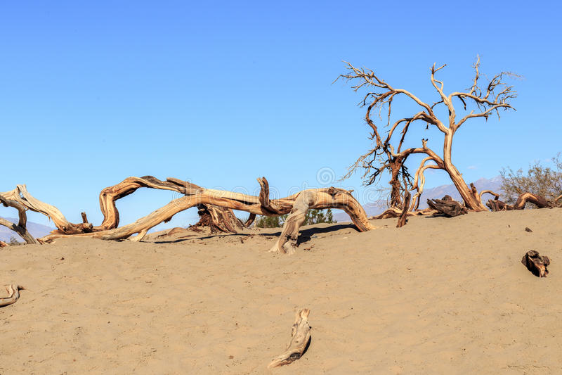 Ξηρό δέντρο στην κοιλάδα θανάτου στοκ φωτογραφία