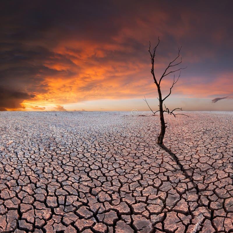 Ξηρό δέντρο στην ξηρά γη στοκ φωτογραφίες με δικαίωμα ελεύθερης χρήσης