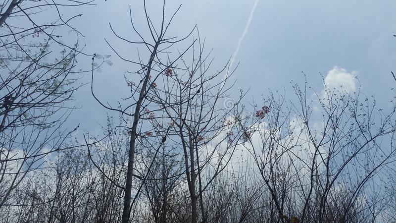 Ξηρό δέντρο στον μπλε θερινό ουρανό στοκ εικόνες