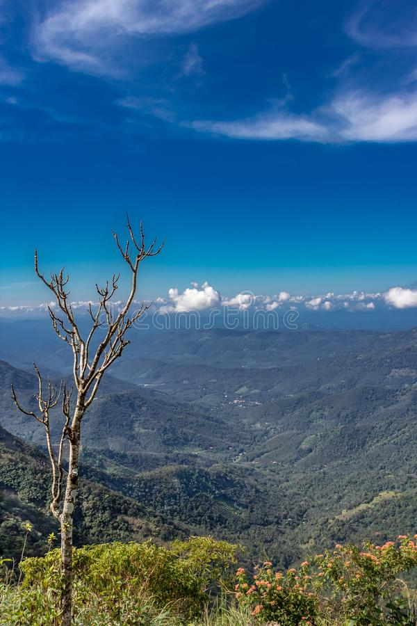 Ξηρό δέντρο σε ένα καλό μπλε τοπίο λόφων στοκ φωτογραφία