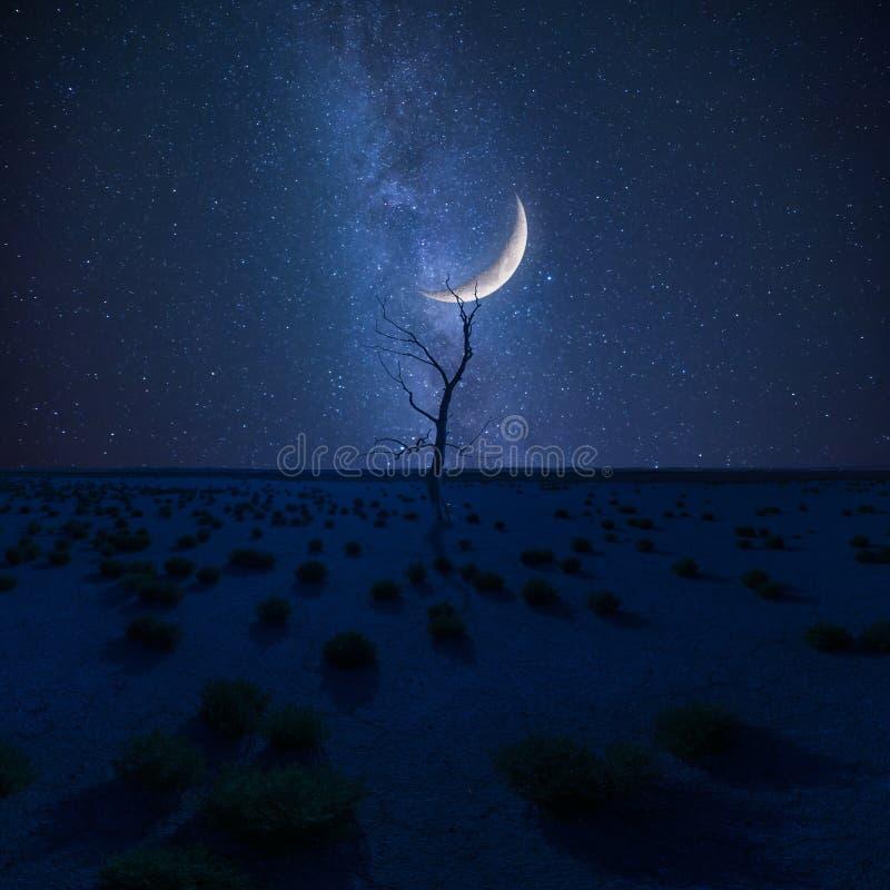 Ξηρό δέντρο στην έρημο στο τοπίο νύχτας στοκ εικόνα με δικαίωμα ελεύθερης χρήσης