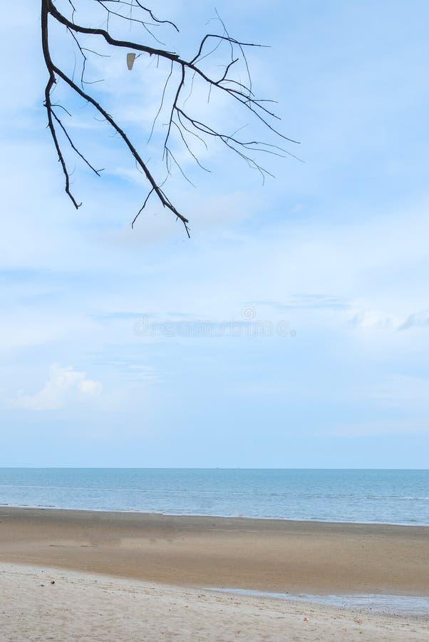 Ξηρό δέντρο στην παραλία άμμου στοκ εικόνες
