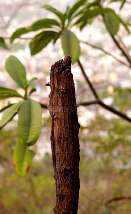 Ξηρό και νεκρό κολόβωμα δέντρων με τα πράσινα φύλλα στο υπόβαθρο στοκ φωτογραφίες