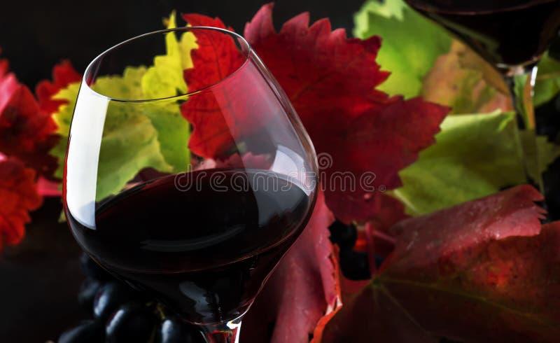 Ξηρό κόκκινο κρασί από τα σταφύλια μαύρου πινώ στα μεγάλα γυαλιά, ΕΤΠ φθινοπώρου στοκ φωτογραφία