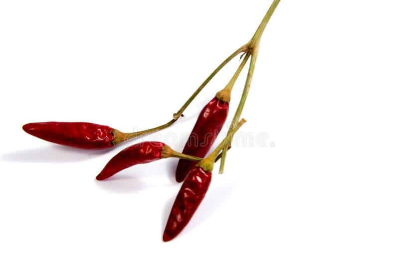 Ξηρό κόκκινο πιπέρι του Cayenne τσίλι ή τσίλι που απομονώνεται στοκ εικόνες