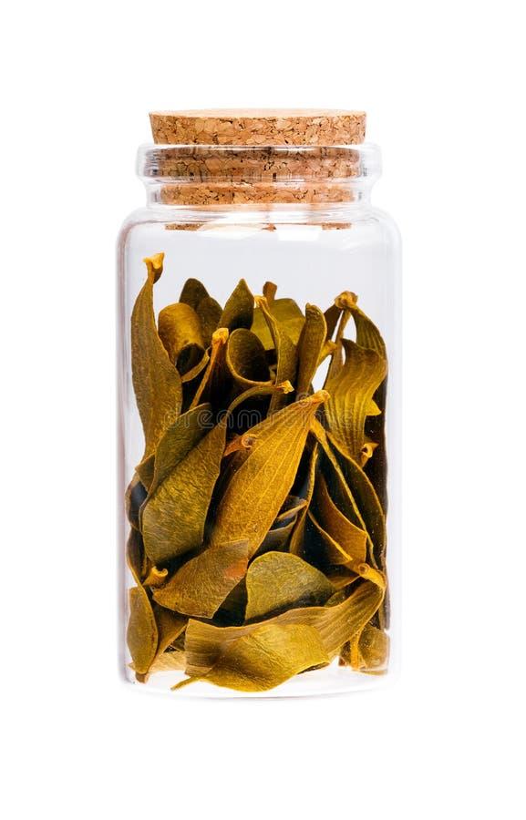 Ξηρό λεύκωμα Viscum σε ένα μπουκάλι με το πώμα φελλού για την ιατρική χρήση στοκ εικόνες με δικαίωμα ελεύθερης χρήσης