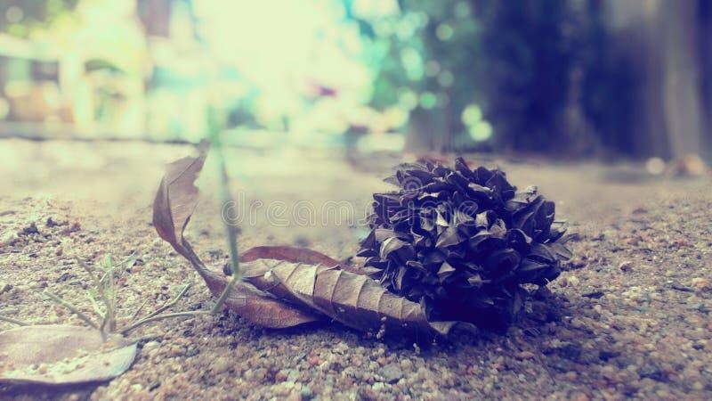 Ξηρό λουλούδι μοναξιάς στο έδαφος στοκ φωτογραφίες