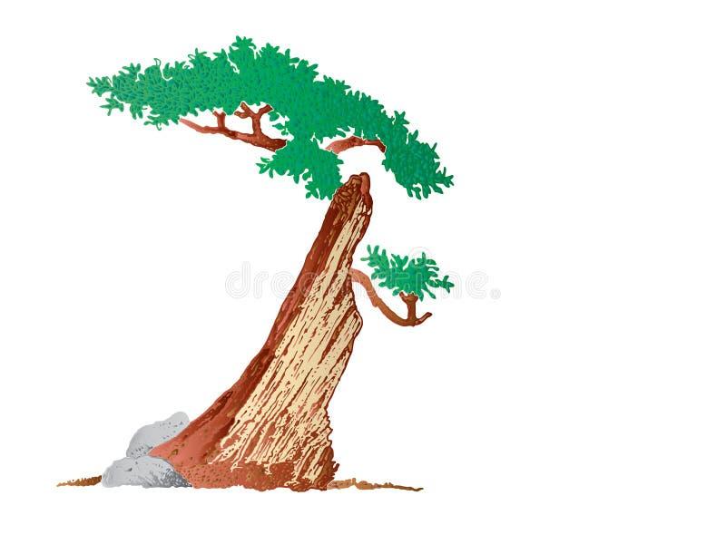 ξηρό μισό δέντρο στοκ φωτογραφίες