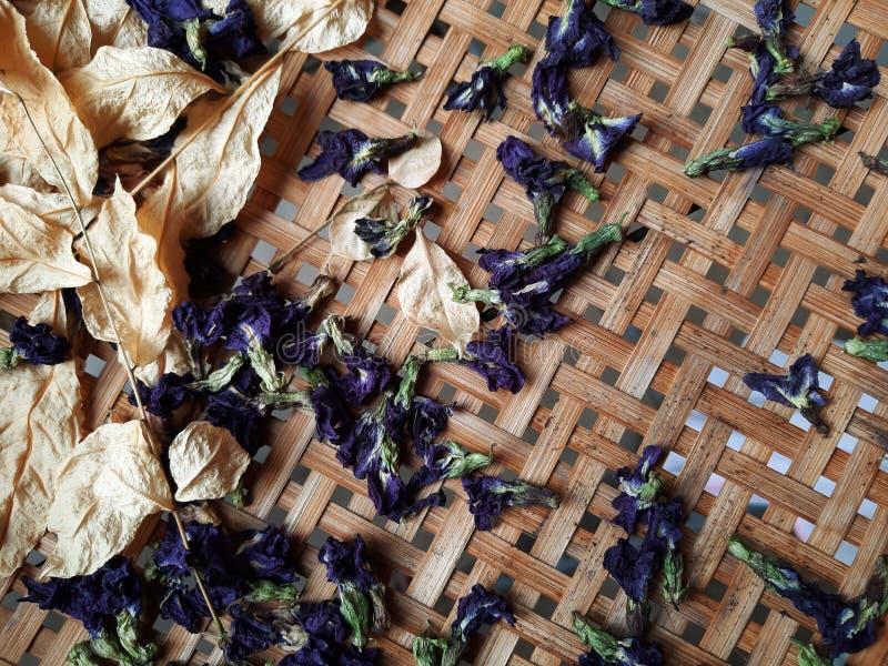Ξηρό μπιζέλι πεταλούδων στοκ φωτογραφία με δικαίωμα ελεύθερης χρήσης