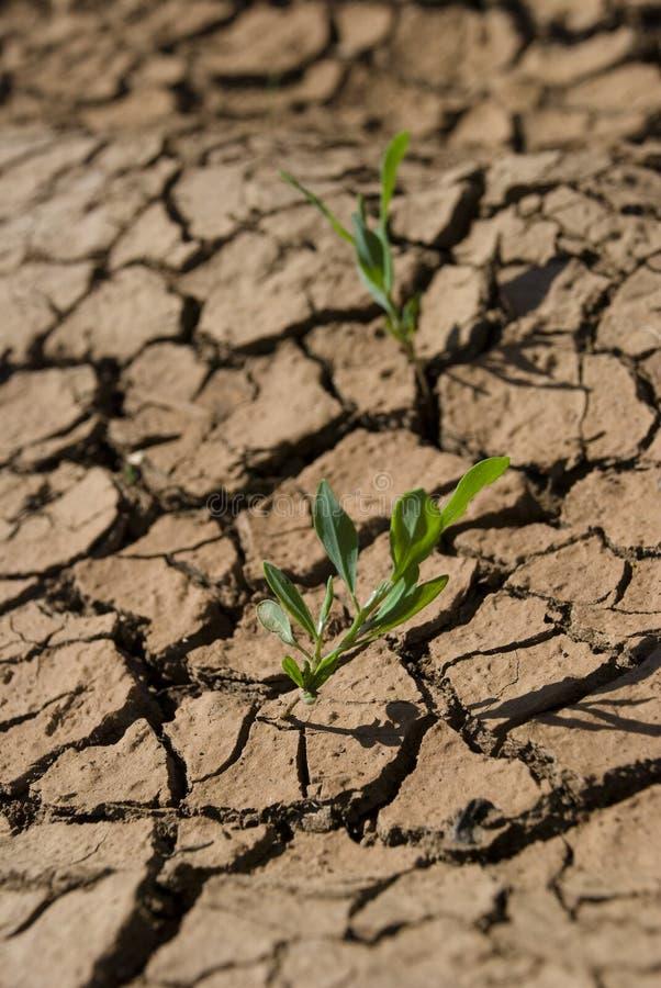 ξηρό μόνο χώμα φυτών στοκ φωτογραφίες