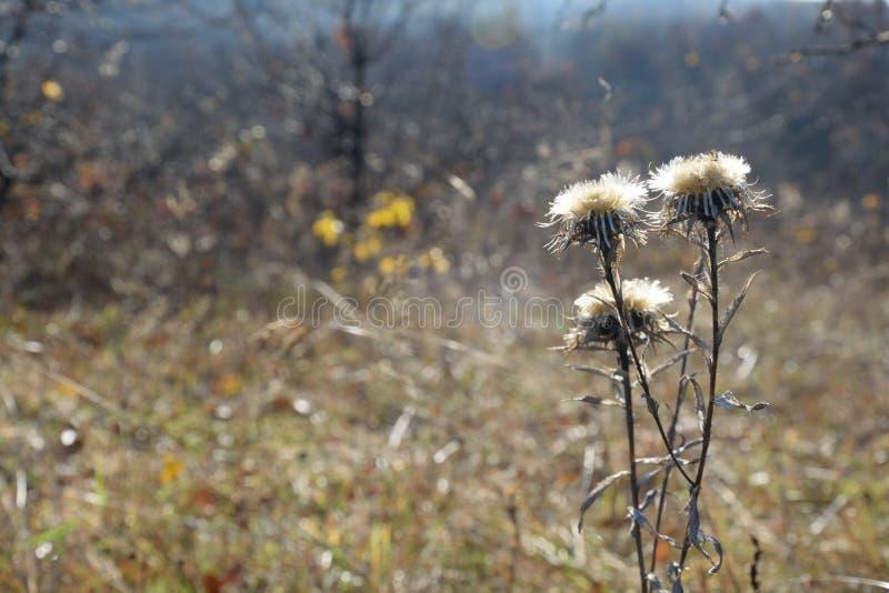 Ξηρό λουλούδι σε ένα υπόβαθρο φθινοπώρου στοκ εικόνες