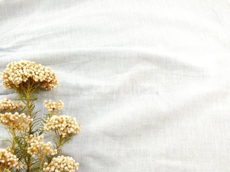 Ξηρό λουλούδι στη σύσταση του υποβάθρου υφάσματος στοκ εικόνες με δικαίωμα ελεύθερης χρήσης