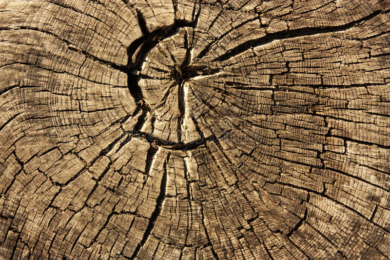 ξηρό παλαιό δέντρο κολοβω&m στοκ φωτογραφία με δικαίωμα ελεύθερης χρήσης