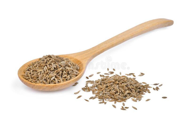 Ξηρό σπόρος ή το κυμινοειδές κάρο κύμινου στο ξύλινο κουτάλι που απομονώνεται στο λευκό στοκ εικόνες με δικαίωμα ελεύθερης χρήσης
