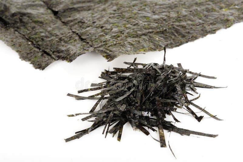Ξηρό φύκι στοκ εικόνα με δικαίωμα ελεύθερης χρήσης