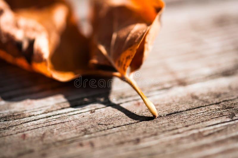 Ξηρό φύλλο στοκ εικόνα
